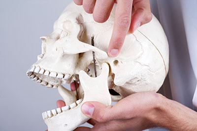 Picture of a skull held in someones hand with a finger pointed to the Temporomandibular Joint (TMJ)